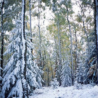 Wintereinbruch - p989m885347 von Gine Seitz