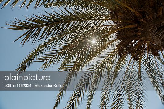 Palme im Gegenlicht - p081m1182334 von Alexander Keller