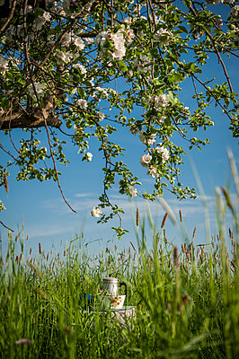 Picnic under blooming apple tree - p1288m1161438 by Nicole Franke