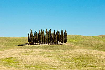 Cypresses - p432m702622 by mia takahara