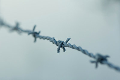 Frost covered barbed wire - p6241738f by Odilon Dimier