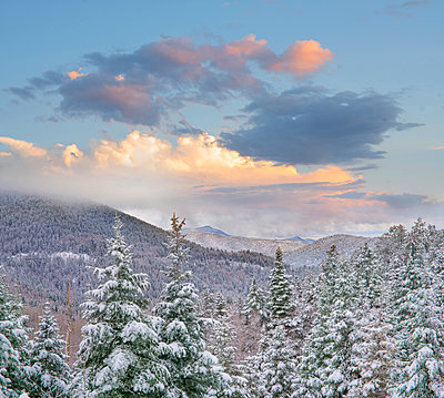 Coniferous forest in winter, Aspen Vista, Santa Fe National Forest, New Mexico - p884m1357013 by Tim Fitzharris
