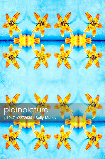 Abstract kaleidoscope pattern of bidens beedance flowers against light blue background - p1047m2272639 by Sally Mundy