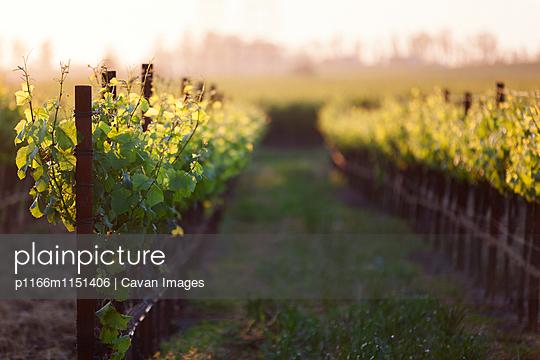 p1166m1151406 von Cavan Images