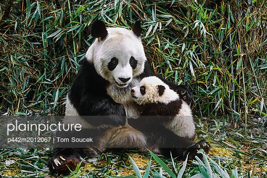 p442m2012067 von Tom Soucek