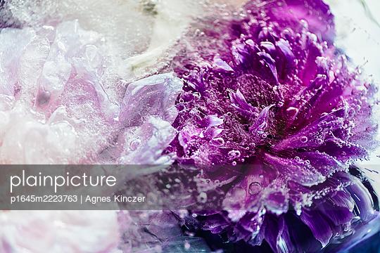 Eisblume - p1645m2223763 von Agnes Kinczer