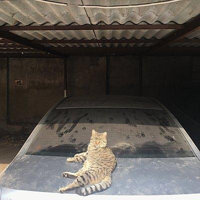 Katze liegt auf staubigem Auto - p1401m2184895 von Jens Goldbeck