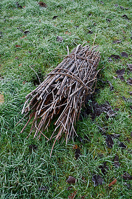 Bundle of Brushwood on Frosty Grass - p1562m2254542 by chinch gryniewicz