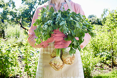 Gemüse ernten - p464m1172236 von Elektrons 08