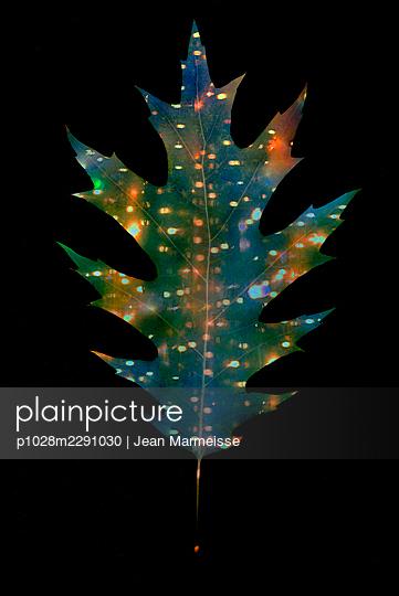 Red oak leaf - p1028m2291030 by Jean Marmeisse