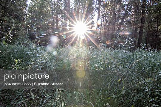p343m1520866 von Suzanne Stroeer