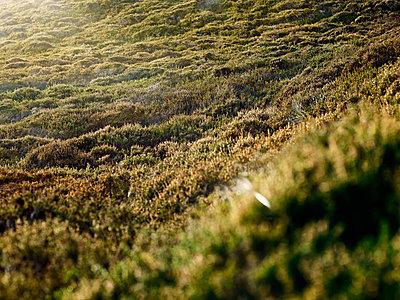 Dune scenery on Sylt island - p1342m1332662 by Sebastian Burgold