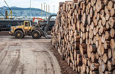 A loader in a logging yard in Lyttelton, New Zealand. - p343m1184369 by Alasdair Turner