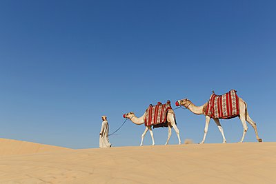 Bedouin walking with two camels in desert, Dubai, United Arab Emirates - p429m1021573f by Lost Horizon Images
