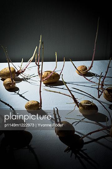 Potatoes - p1149m1222973 by Yvonne Röder