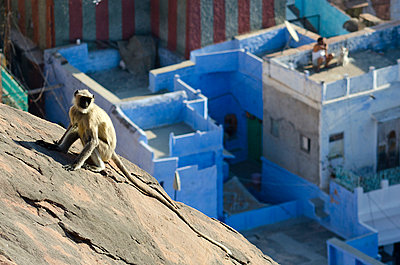 Monkey Above Blue City - p1072m941379 by chinch gryniewicz