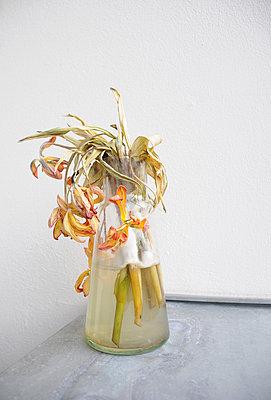 Moldy flowers - p1174m1015469 by lisameinen