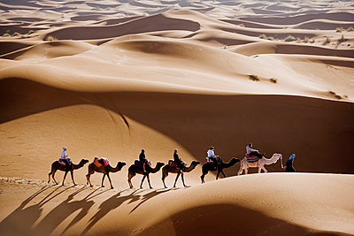 Dromedarys in the desert, Morocco. - p312m1076601f by Roine Magnusson