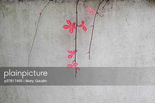 p37817465 von Mary Gaudin