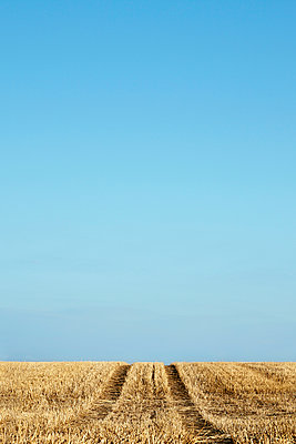 Harvested field - p1006m891334 by Danel