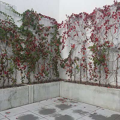 Rankpflanzen an Hauswand - p1401m2126306 von Jens Goldbeck
