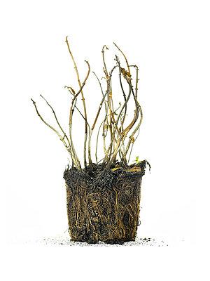 Dead plant - p56710134 by daniel belet
