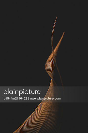 Feather - p1544m2116452 by