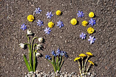 Flowers arranged on asphalt - p5330277 by Böhm Monika