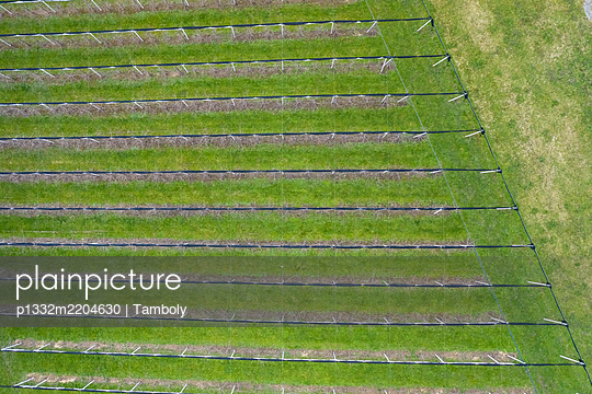 Switzerland, Flawil, St. Gallen, Aerial view of Vineyards - p1332m2204630 by Tamboly
