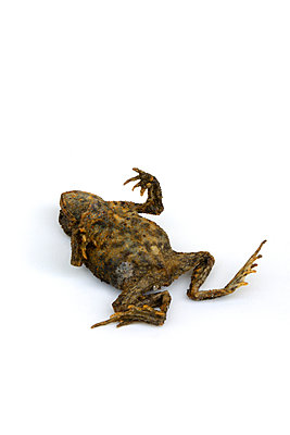 dead toad - p876m2128175 by ganguin