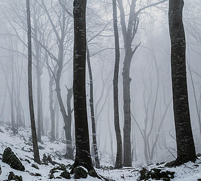 Snowcapped forest with morning fog - p910m1467821 by Philippe Lesprit