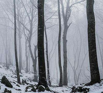 Verschneiter Wald im Morgennebel - p910m1467821 von Philippe Lesprit