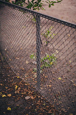 Fence - p1076m934497 by TOBSN