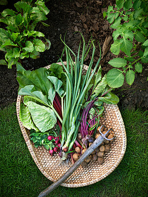Vegetables in basket - p312m1011958f by Matilda Lindeblad