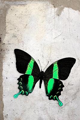 Butterfly - p450m955590 by Hanka Steidle