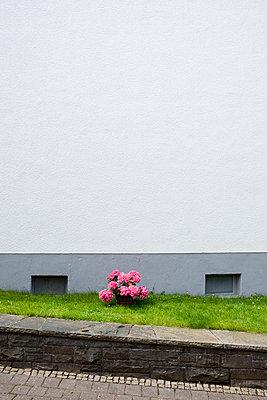 Vorgarten - p666m698802 von Sennaa