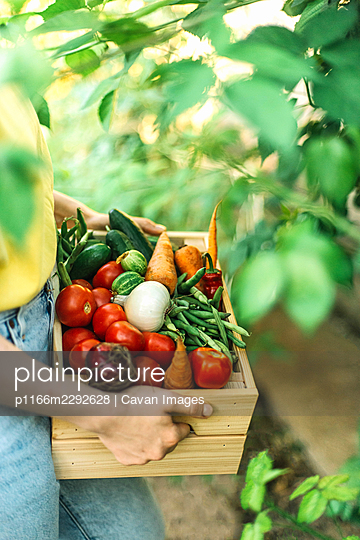 Woman holding  freshly harvested vegetables in crate at organic - p1166m2292628 by Cavan Images