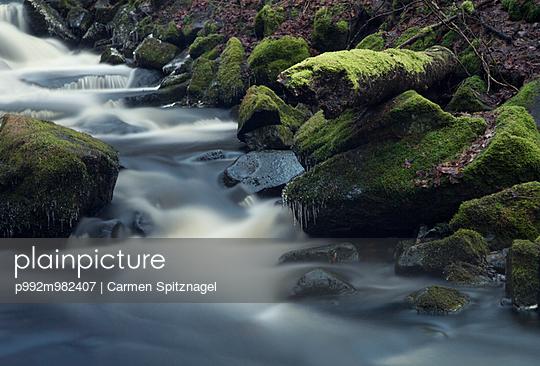 Bach - p992m982407 von Carmen Spitznagel
