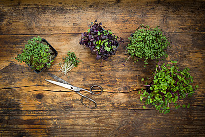Variety of organic cress - p300m1460463 by Larissa Veronesi