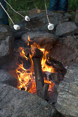 Roasting Marshmallows Over An Open Campfire; Vermont Usa - p442m839513 by Spyros Bourboulis