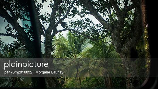 Durchblick, Wald - p1473m2016092 von Morgane Launay