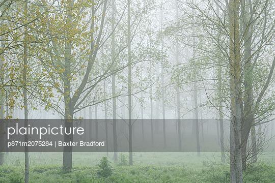 p871m2075284 von Baxter Bradford