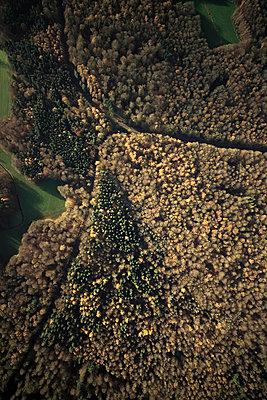 Herbstwald - p1016m1025660 von Jochen Knobloch