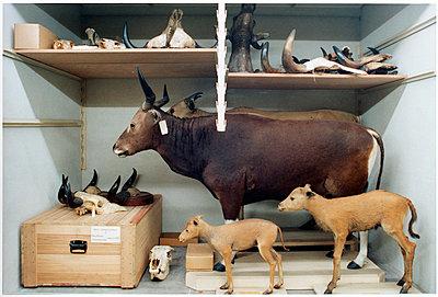 Tiere - p1205m1020914 von Annet van der Voort