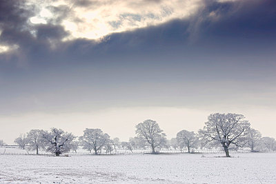 Snow covered trees and field, Northumberland, England - p4429425f by Design Pics