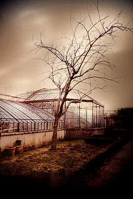 Greenhouse - p631m913023 by Franck Beloncle