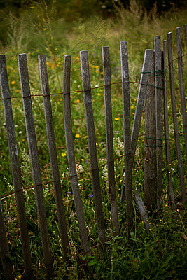 Old wooden fence in garden - p1028m1044819 by Jean Marmeisse