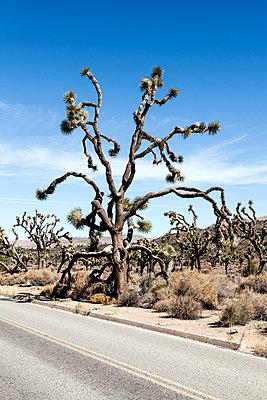 Joshua Tree National Park - p1094m971549 von Patrick Strattner