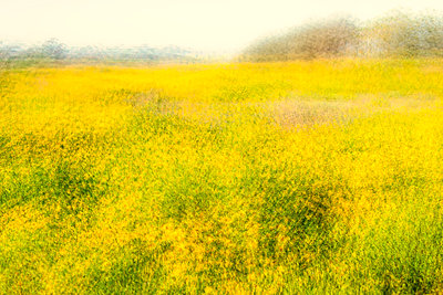 Field of California wildflowers - p1436m1588854 by Joseph S. Giacalone