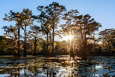 USA, Texas, Louisiana, Caddo Lake State Park, Saw Mill Pond, bald cypress forest - p300m1449478 by Fotofeeling